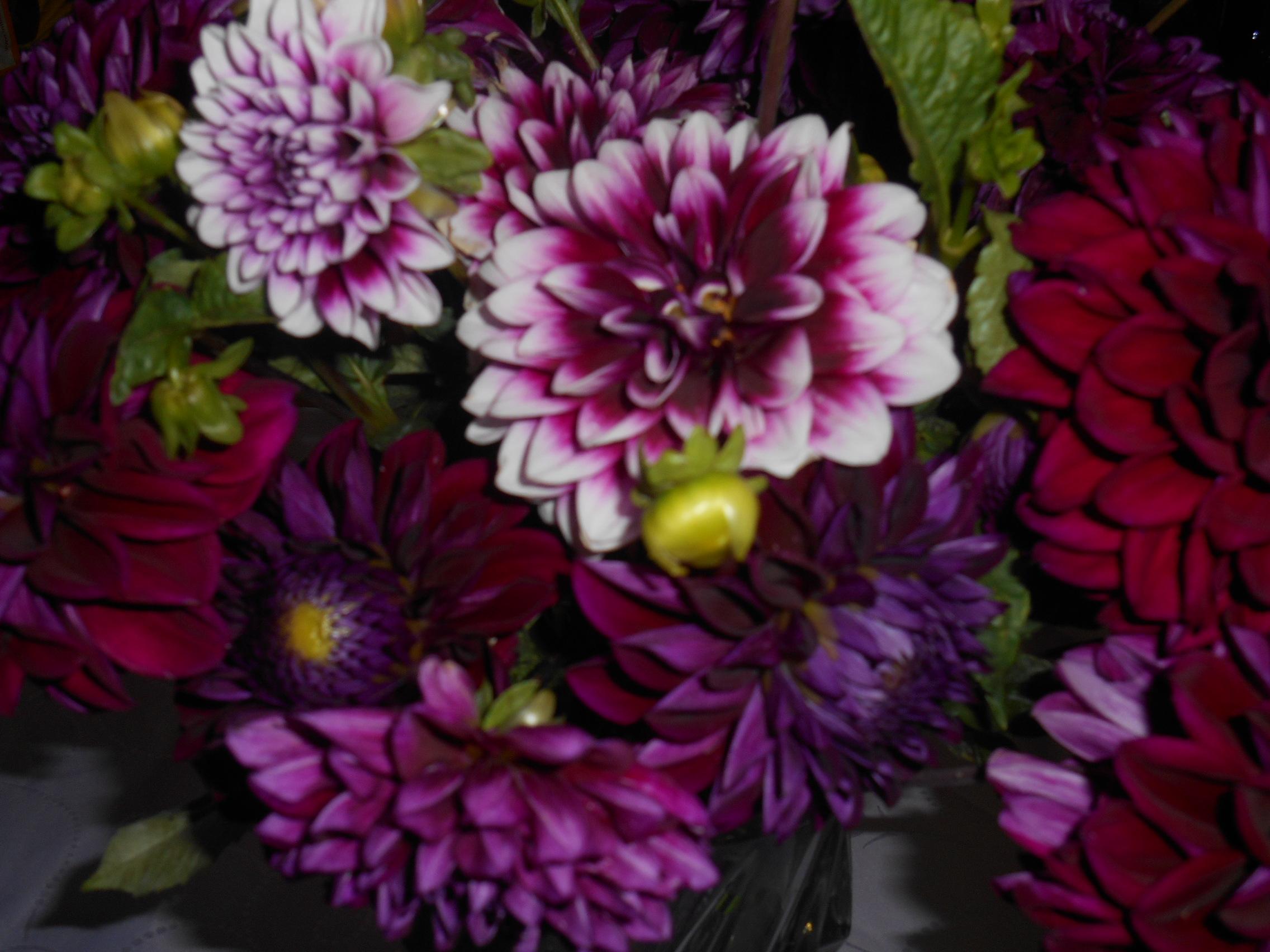 Rose/FleursDuMois/DSCN2203.JPG